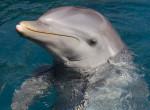 Megrázó felvétel: Kegyetlenül meggyilkolt delfin ügyében indult nyomozás