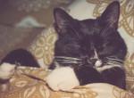 Együtt alszol a macskáddal? Akkor jobb, ha ezeket tudod