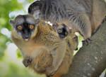 Ennél édesebbet ma már nem látsz: a Nyíregyházi Állatpark új ikerpárját mindenki imádja