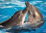 Betiltják a delfinek és bálnák fogságában tartását - Nagy lépést tett Kanada
