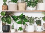 7 szobanövény, ami tökéletesen elvan a legsötétebb sarokban is