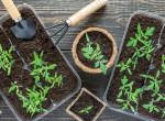 A profik elárulták: Ezzel a 6 trükkel turbózz fel bármely kertet