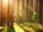 Békésen sétált a kissrác az erdőben, amikor vérszomjas lény bukkant fel mögötte - Videó