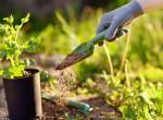 A gyönyörű és egészséges kert titka: Így komposztálj akár lakásban is
