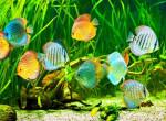 Dobd fel a nappalidat! Így használd az akváriumot dekorációként