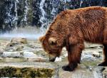 Visszafordíthatatlanul itt a tavasz? Előbújtak a szegedi medvék téli álmukból