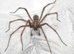 Hatásos tippek nyolclábúak ellen: így űzd el a pókokat a lakásból