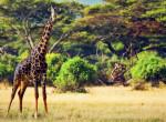 Nem érdekli, hogy sokan gyűlölik: Büszkén nyilatkozott a nő, aki lelőtt egy ritka fekete zsiráfot
