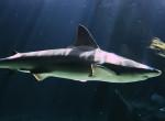 Sokkoló videó terjed a neten: Száznál is több cápát sodort partra az óceán