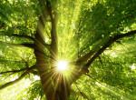 Új világrekord született: 350 millió fánál is többet ültettek a lakosok