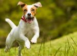 Lehet kutyát sétáltatni este nyolc után