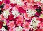 Virágjóslás: neked melyik a kedvenced? Ezt árulja el személyiségedről