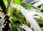5 növény, ami megtisztítja a levegőt az otthonodban