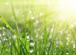 Napi időjárás: vitathatatlanul itt a tavasz, napsütéses idő várható