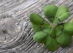 Ezen a 4 dolgon áll vagy bukik, hogy szerencsés lesz-e az életed!