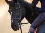 Súlyos lovasbalesetet szenvedett a magyar színész - Kollégái aggódnak érte