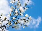 Nagy áprilisi előrejelzés: ilyen időjárás várható ebben a hónapban