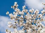 Idén nagyon későn jön az igazi tavasz - itt az előrejelzés