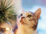Ilyen fenyőfát szerezz be karácsonyra, ha macskád van otthon!