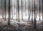 November meghozza a havat: ezt jósolják a meteorológusok a következő hónapra
