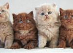 Ausztráliában 2 millió cicát ítéltek halálra - Ez az oka