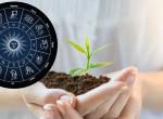 Mi a horoszkópod? - Ez a hozzád illő szobanövény