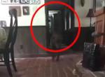 Elborzadt a gazdi, amikor meglátta, mit rögzített a kutyafigyelő kamera