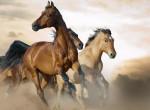 Hány lovat látsz ezen az ábrán? Tudatalattid rejtett mélységeire derülhet fény