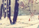 Nagy téli előrejelzés: kemény időjárás várható a következő hónapokban