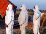 Elkezdődött a járvány? Már Hajdú-Bihar megyében is megjelent a madárinfluenza