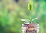 Valódi pénzmágnesek: növények, amik gazdagságot hoznak a házhoz