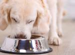 Kutyaeledelt hívott vissza a NÉBIH, ne adj belőle házi kedvencednek