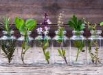Fűben-fában orvosság: a legbrutálisabb gyógynövények - Muszáj, hogy otthon legyenek