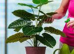 Briliáns trükk, hogy soha többé ne rontsd el a növényeid öntözését