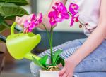 Tippek az orchidea megfelelő gondozására: így biztosan virágba borul