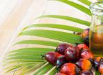 Nem mindegy, hogy pálmaolajról vagy pálmamag-olajról beszélünk - Ez a különbség