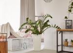 A legszebb virágzó szobanövények, amik színt visznek a lakásodba