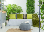 Ezeket a növényeket vedd, hogy egészségesebb legyen az otthonod