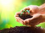 Így óvd az élővilágot - 5 pofonegyszerű tipp, amivel sokat tehetsz