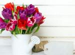 Imádod a tulipánokat? Ezeket biztosan nem tudtad róluk!