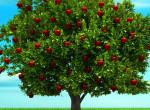 Melyik gyümölcsöt szakítanád le először a fáról? Ezt árulja el rólad