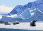 Lassan nyári meleg lesz az Antarktiszon, rekord értéket mértek a kutatók