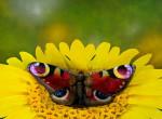 Te is egy pillangót látsz a képen? Akkor valami nem stimmel a szemeddel