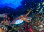 Megvakulhatnak a tengeri élőlények a klímaváltozástól - Az embereket is veszély fenyegeti