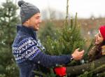 Hogyan válassz tökéletes karácsonyfát? Eláruljuk a titkot!