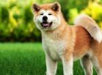 Tudtad? Ezek a leghűségesebb kutyafajták