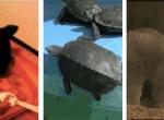 Jól kitolnak egymással: Mutatjuk a Föld 10 legszemetebb állatát