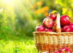 A 12 legjobb almás recept, amit neked is ki kell próbálnod