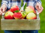 Filléres egészségbomba - Az alma 10 pozitív egészségügyi hatása