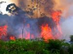 Óriási a káosz! Állatok üvöltésétől visszhangzik a tűz sújtotta Amazonas